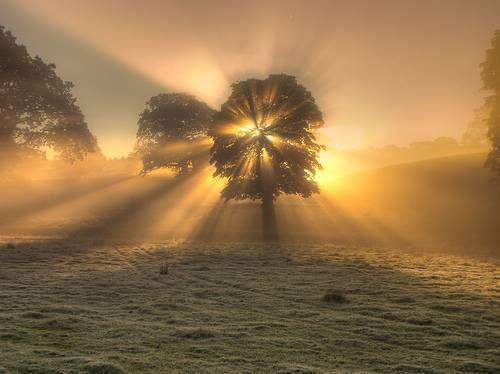 tree-sunburst1